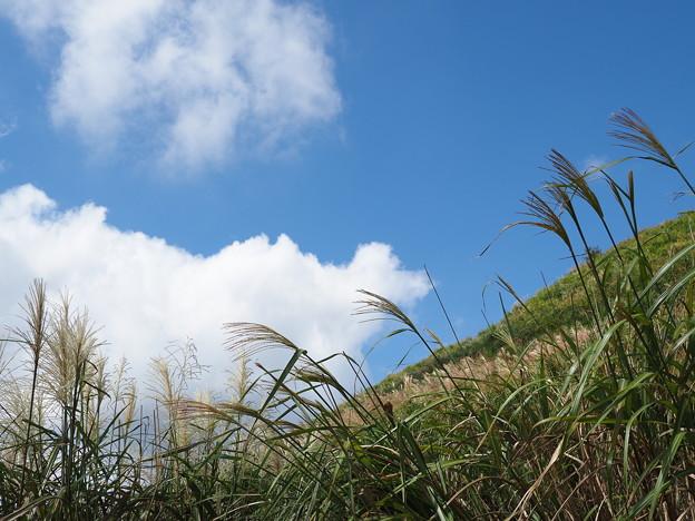 ススキの丘