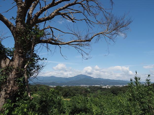 Photos: 大山を望む