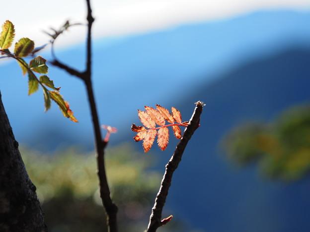 小さい秋見つけた