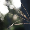 Photos: 木洩れ日を浴びて