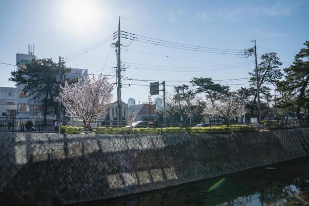 桜 2021 (1)
