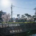 Photos: 桜 2021 (1)