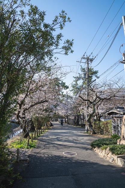 Photos: 桜 2021 (3)