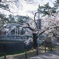 Photos: 桜 2021 (5)