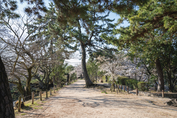 桜 2021 (7)