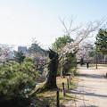 桜 2021 (8)