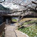 桜 2021 (11)
