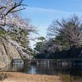 桜 2021 (12)