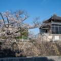 桜 2021 (14)