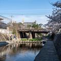 桜 2021 (15)