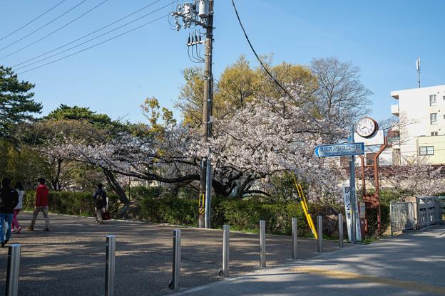 桜 2021 (17)