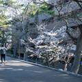 Photos: 桜 2021 (22)
