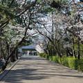 Photos: 桜 2021 (24)
