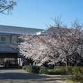 Photos: 桜 2021 (26)