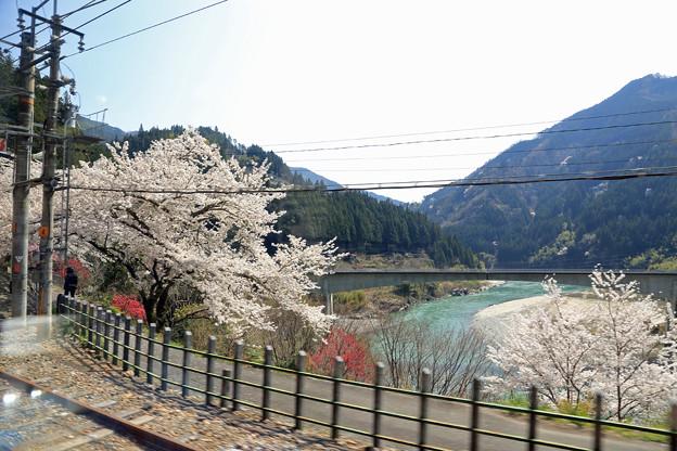 伊那小沢駅の桜