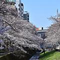 桜モノレール