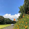 Photos: 近所の里山風景