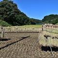Photos: 里山風景 ハザカケ