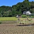 Photos: 里山風景 天日干し準備