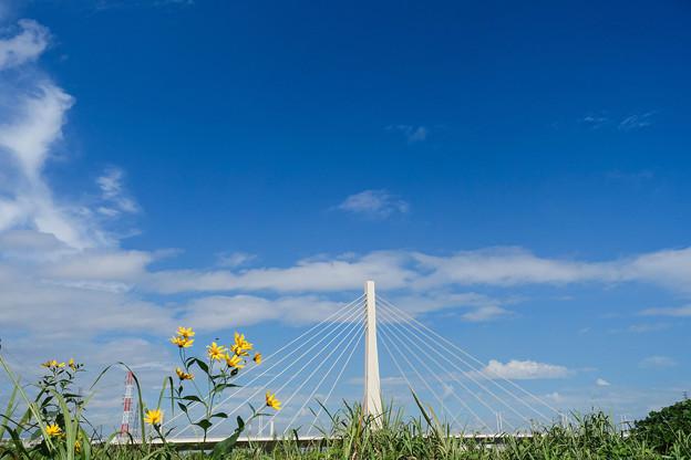 多摩川の秋空  野の花添えた四谷橋