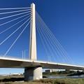 多摩川 四谷橋(斜張橋)