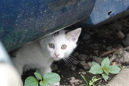 初見の小猫ちゃん。
