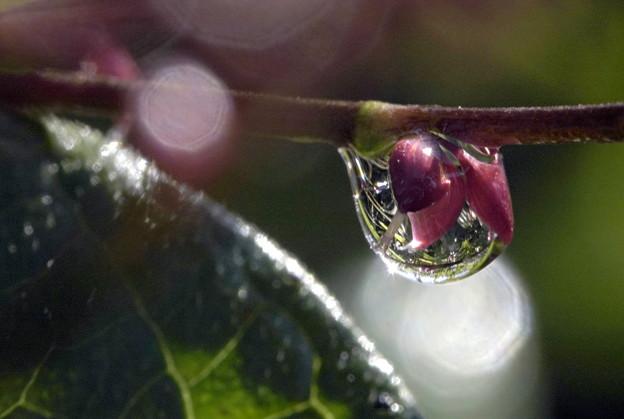 水引の花に雫の一枚。