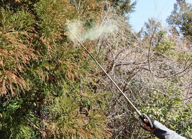 杉花粉も沢山出ますね。
