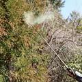 Photos: 杉花粉も沢山出ますね。