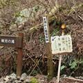 Photos: 稚児の滝