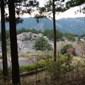 奥山公園桜