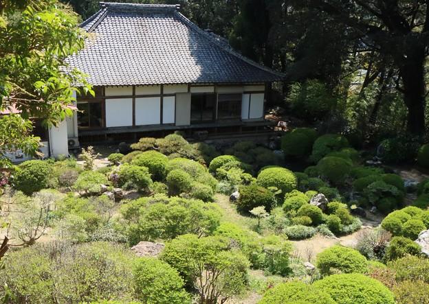 長楽寺「満天躑躅、どうだんつつじ」の庭