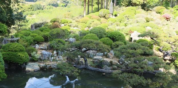 長楽寺満天星の庭