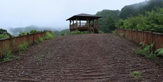 太田川ダム「かわせみ湖」いろどりみさきこうえん( 彩り岬公園)