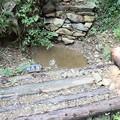 富幕山稲盛橋と小鳥の水場