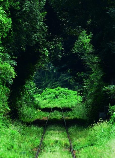 ?緑のトンネル