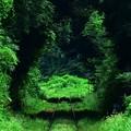 Photos: ?緑のトンネル