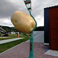 Photos: 飛んできたジャガイモ