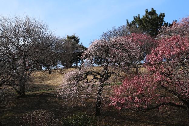 Photos: 梅林_公園 D7808