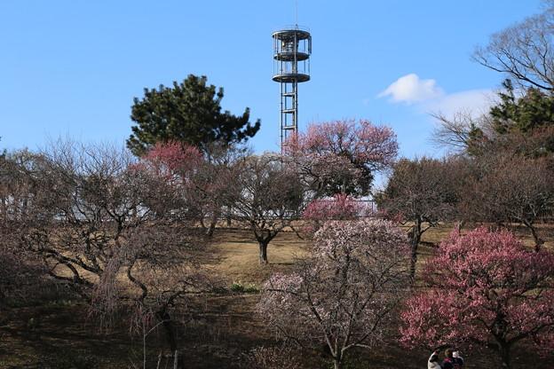 Photos: 梅林_公園 D7806