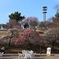 Photos: 梅林_公園 D7807