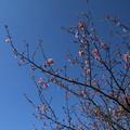 桜_散歩道 D7850