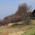 桜_散歩道 D7847