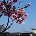 桜_常総市 D7938
