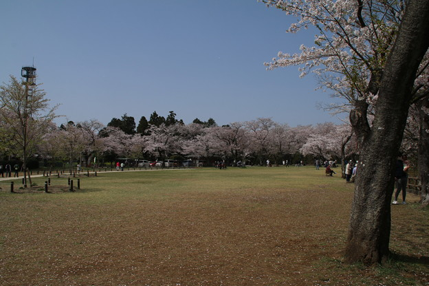 あけぼの山公園 D8031