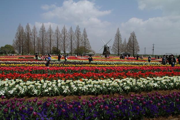 あけぼの山公園 D8009