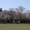 桜_公園 D8034