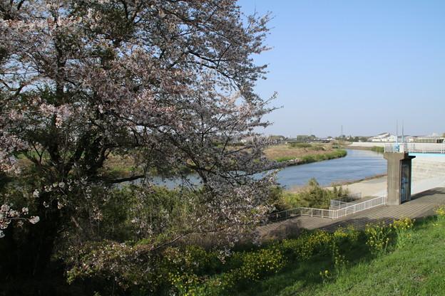 桜_鬼怒川 D8050