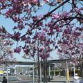 シモクレン_駅前 F4840