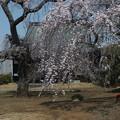 Photos: 桜_西林寺 F4845